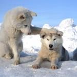 Solsticio de Invierno Nooooo!!!!