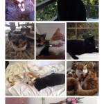 ¡¡Feliz Día del Gato!!