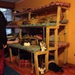 Fundación Adopta Un Gatito. Ayudemos Todas.