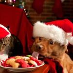 Mis Deseos De Navidad