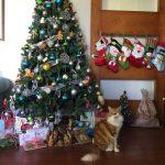 Resumen de Navidad 2017